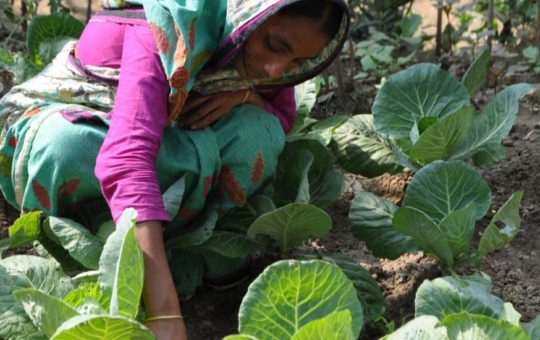 Gardening: A Sustainable Solution for Malnutrition? (HKI)