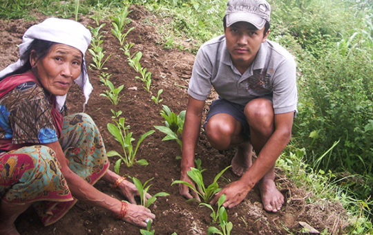 Can Medicinal Plants Alleviate Poverty and Protect Nepal's Fragile Environment? (Ensia)